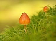 雨后唯美森林小蘑菇梦幻美景图片