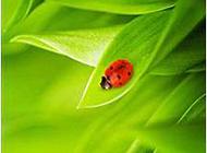 绿色唯美植物叶子图片