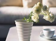 白色杯子里的花朵唯美图片