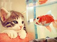 小猫咪小清新意境萌图片大全