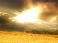 秋日精美麦浪金黄风景清新背景素材