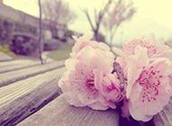 爱的美丽就在于身边有你的陪伴