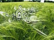 碧绿色的麦田创意图片