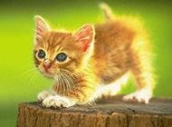 超萌超可爱猫咪草地玩耍图片