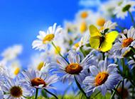 小清新浪漫花卉精美梦幻高清壁纸