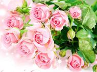 粉色玫瑰花图片唯美图片素材