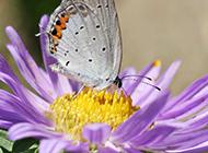 蝴蝶采花微距摄影图