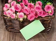 素雅梦幻粉色玫瑰清新风格图片