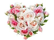 淡雅心形玫瑰花素材