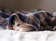 彼岸桌面壁纸 睡梦中的小猫壁纸