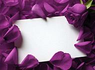 紫色玫瑰花图片唯美情人节背景