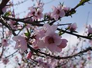 春天桃花风景图素材欣赏