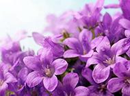 紫色鲜花唯美背景图片素材