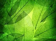 绿色通透树叶背景高清图片素材