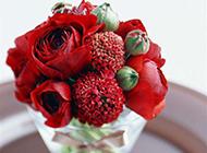 花瓶里的红色鲜花特写图片