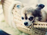 非主流唯美图片 守护你的温馨宠物