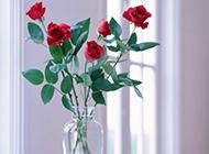 玻璃花瓶里的玫瑰花高清图片