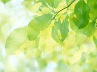 高清绿色养眼唯美3d桌面壁纸