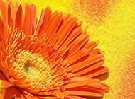 鲜艳的花朵高清宽屏唯美壁纸