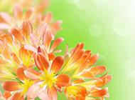 鲜花浪漫背景图片素材
