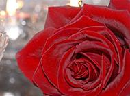 一朵红玫瑰和放着蜡烛的玻璃杯图片