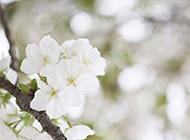 高清朦胧梦幻花卉梦桌面壁纸
