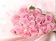 粉色玫瑰背景素材清新唯美