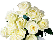 娇羞欲滴的玫瑰花束