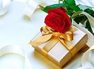 玫瑰花素材图清新靓丽