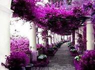 意大利纯白街角浪漫唯美风景图