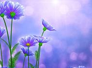 紫色花朵油画图片欣赏