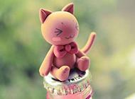 温馨可爱好奇猫咪图片