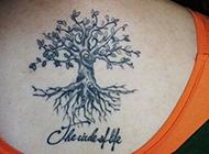满背的大树纹身图案大全