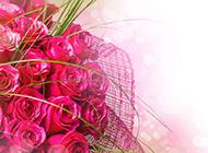 浪漫情人节红色玫瑰花高清图片