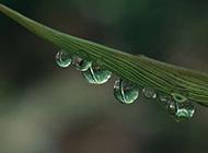 绿叶上亮晶晶的水滴图片