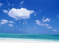 ppt背景图片 蓝天白云与海鸥