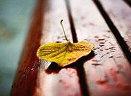长木椅上的一片枯黄树叶