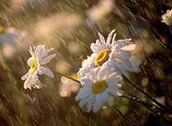 下雨的小清新图片伤感唯美