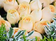 香槟玫瑰图片花语只钟情你一个