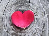 玫瑰花浪漫主题图片素材