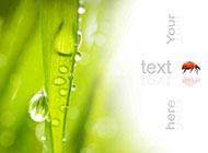 下雨天植物水滴图片素材欣赏