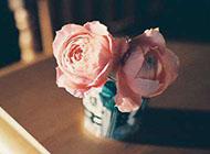 浪漫幸福唯美的个性玫瑰花图片大全