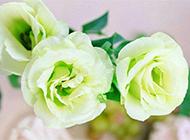 鲜花图片素材高清微距特写