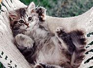 超萌猫咪图片表情逗趣搞笑