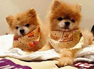 萌系宠物图片可爱狗狗惹人发笑