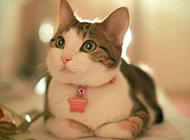 小猫咪乖巧卖萌图片逗趣可爱