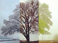 浪漫世界唯美四季欧美风景图片