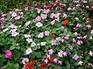 春天里绽放的野花图片