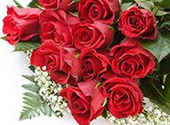 火红玫瑰浪漫风景高清壁纸