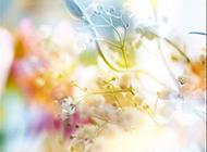 粉色花梦幻背景图片素材